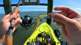 Fishing Pilings with Live Shrimp