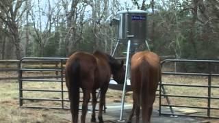 Automatic Horse Feeders - Feed Smart - Newlin Farm - Grapeland Tx 3-2015