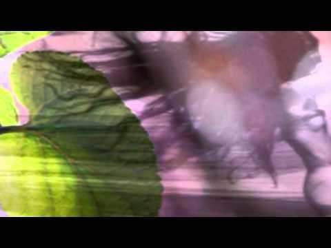 D'aria e di musica - Renato Zero