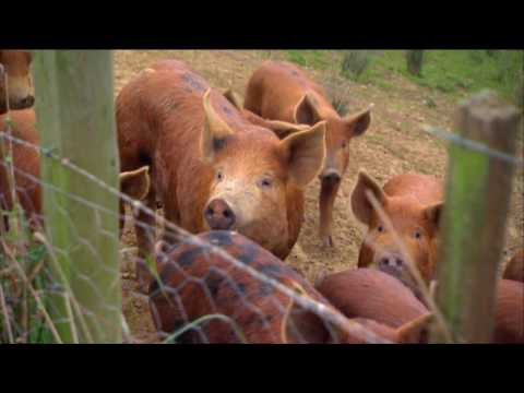 Borger Free Range Pigs and Eggs