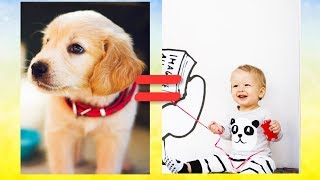 5 Interesting facts about dogs that you don't know | Dogs facts| Interesting facts about dogs.