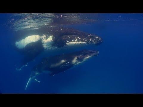 Diving Fiji and Tonga HD