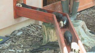 Újabb népszerű programmal bővült a Xantus János Állatkert egyébként...
