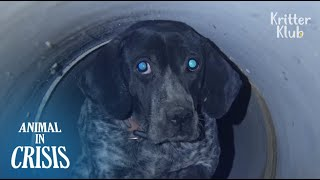 The Mystery Of A Hunting Dog Tormented By Bullet Shots (Full Story) | Animal In Crisis EP76