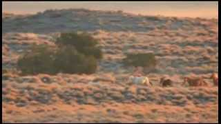 Antelope Wild Horse Roundup, Day 1 (10/2/12)