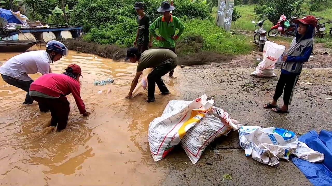 Sông Đồng Nai (Định Quán ) Những Ngày Lũ Về . ( Bảo Số 3)  QUĂNG 1 Phát Chài Được 10 kg Cá