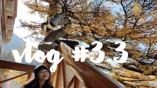 VLOG #3.3 | Tokyo, Japan (Mt. Fuji, Yoyogi Park, Japanese Village, Gundam, ...)