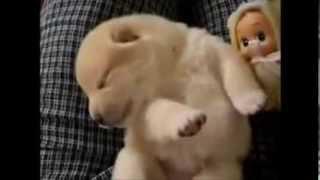 Khi những chú chó ngủ mơ - Cực hài =))