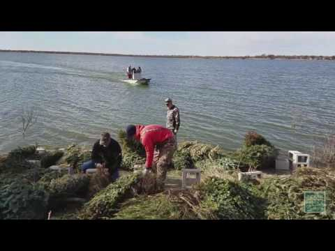 Christmas Trees To Fish Habitat - Texas Parks And Wildlife [Official]