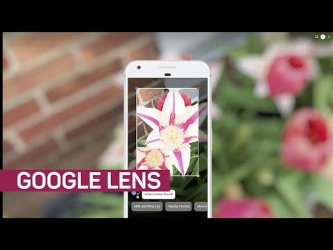Free Contact Lens Trial >> Google Lens is smart enough to identify flower species ...