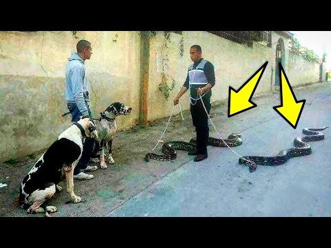 বিশ্বের 7 টি অদ্ভুত পোষা প্রাণী যা দেখলে বিস্মিত হবেন । 7 MOST UNUSUAL PETS IN THE WORLD