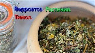 Варроатоз. Растительные масла. Тимол