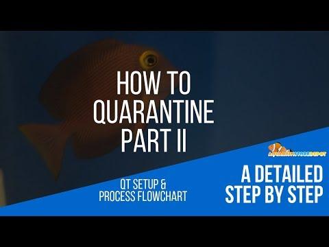 How To QT Ep II -  Setting Up A Quarantine Tank & QT Process