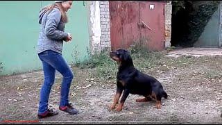 ДРЕССИРОВКА РОТВЕЙЛЕРА.Rottweiler Training. Наташа и Нора. Odessa.