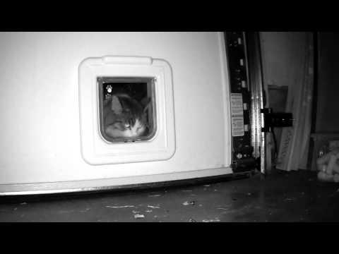 Cat Mate Elite Flap Door installed in Garage