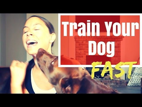 1 Minute Dog Training  |  Fostering Dogs Made EASY  |  His First Time!