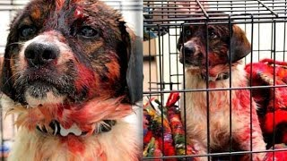 Очень трогательная история спасения собаки ДО СЛЁЗ