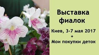 Выставка фиалок в Киеве 3-7 мая 2017 + Мои покупки растений
