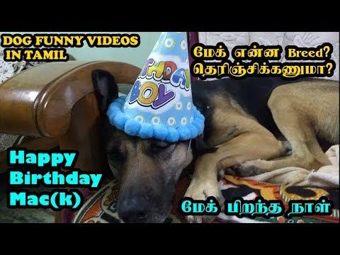 மேக் பிறந்த நாள் | Happy Birthday Mac(k) | Funny Dog Videos in Tamil