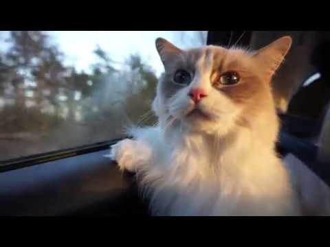 Traveling with my cats - Cat car sickness