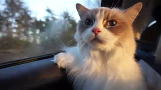 Traveling with my cats  Cat car sickness
