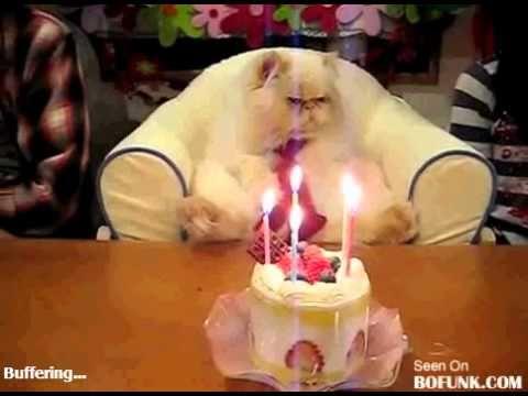 Un feliz Cumpleaños Felino (Para Un Gato)