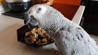Попугай матершинник чё пиздишь лошара чувачок не пизди попугай ругается