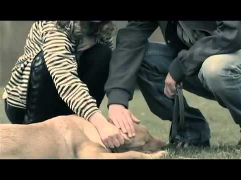 adil-sinovi-tuge-official-video-adil-musicchannel
