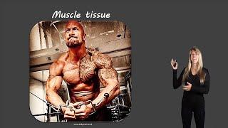 Human tissue types