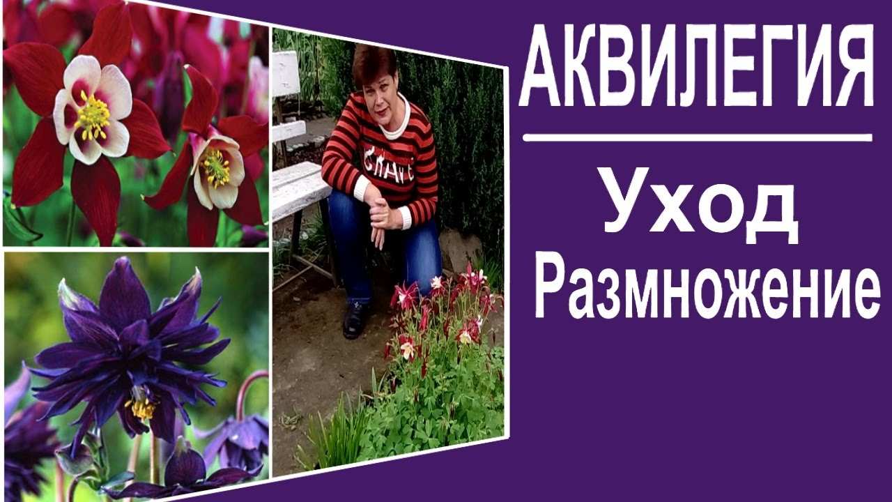 Многолетние цветы, которые цветут уже в первый год - YouTube