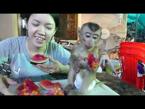 Wow!! Mom Surprise Dodo!! Mom Make Mix Fruit Jelly For Dodo, Dodo Very Happy