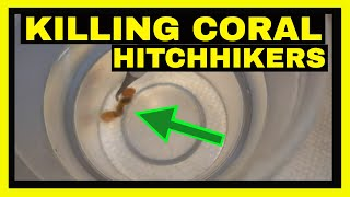 How To Kill Coral Hitchhikers - Marine Melafix - Coral Dip
