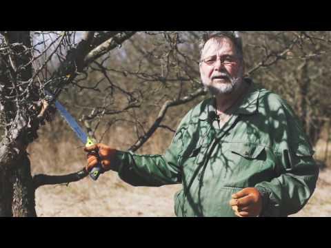 Весенняя обрезка деревьев. Как обрезать старое и запущенное дерево.