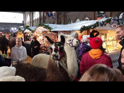 Christmas Celebration in Zurich, Switzerland | Christmas Market in Switzerland, Europe