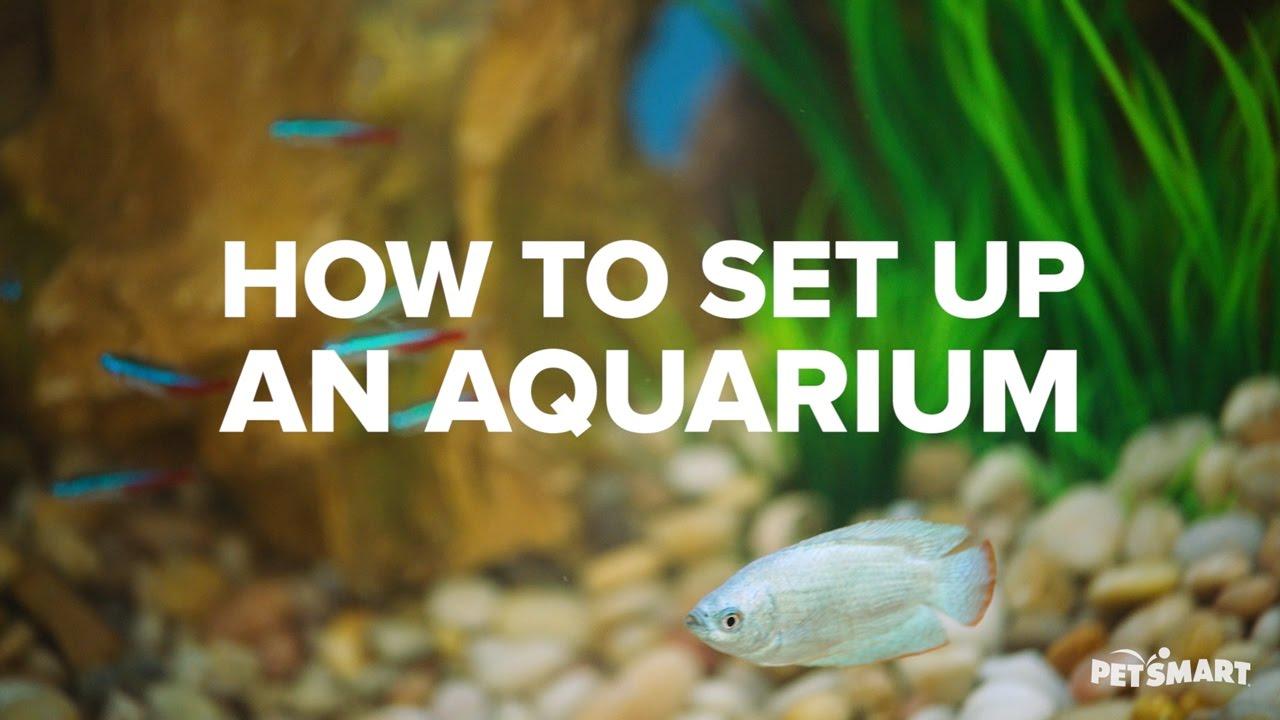 Freshwater fish for aquarium petsmart - How To Set Up An Aquarium Petsmart