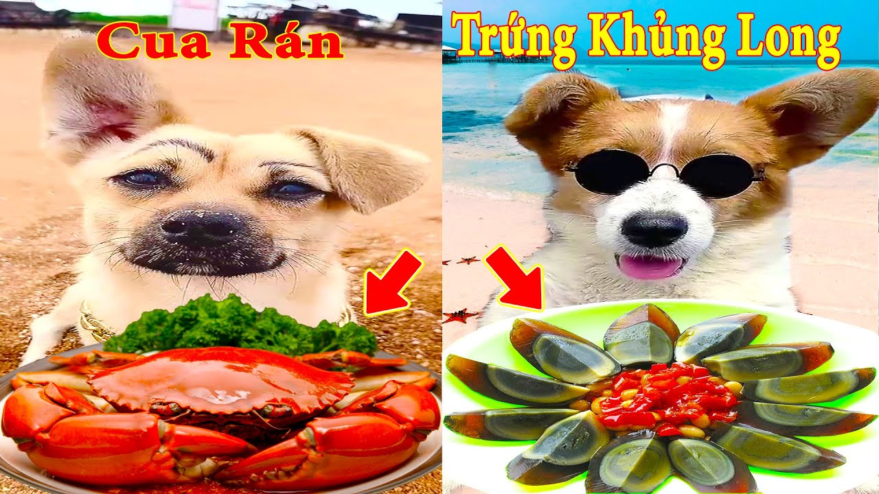 Thú Cưng TV   Bông ham ăn Bí Ngô Cute #57   Chó thông minh vui nhộn   Pets cute smart dog