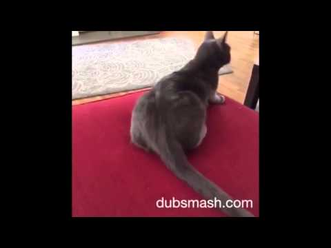 HIT IT FOR ME ONE TIME Dubsmash Compilation 2015