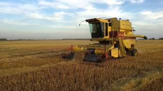 TR85 New Holland combining oats