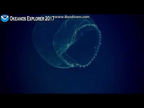 Okeanos at Winslow Reef Area, north of the Phoenix Islands Protected Area