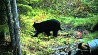 north american hunter 2010 show 8 spring bear hunt