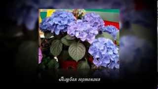 Комнатные и декоративные цветы