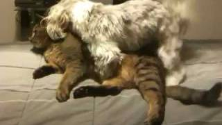 Dog and cat porn