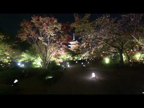 Night view of Kyoto in autumn - To-ji Temple Light up