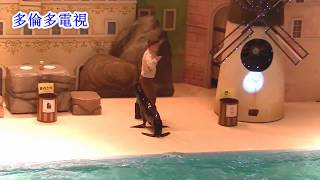 TorontoTV  Travel-Sea Lion Performance多倫多電視
