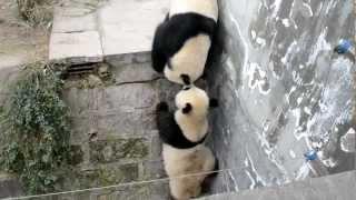 Real Kung Fu Panda