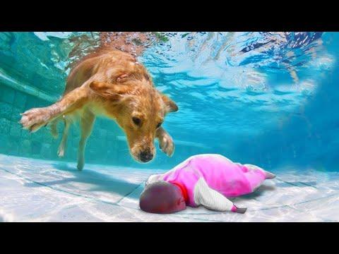 Вопрос: Почему некоторые собаки любят купаться в море?