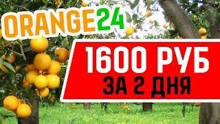 ОБЗОР НОВОГО ПРОЕКТА ORANGE 24 FARM 1600 РУБЛЕЙ ЗА 2 ДНЯ