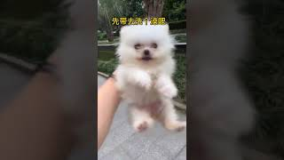 Cute dogs-- ❤️ baby dogs ---- cute and funny dog videos compilation
