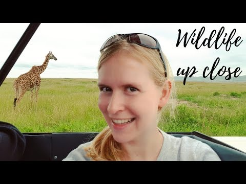 Masai Mara Safari: Lions Up Close! | Kenya Travel Vlog (ft. Circle Of Life)