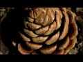 NatureTech : The Material World (BBC) Part 1/4 HD